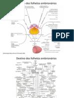 Derivados dos folhetos embrionários