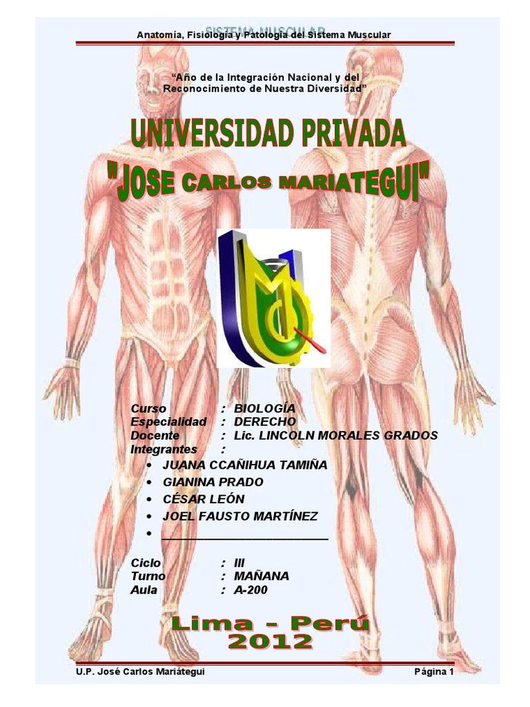 Lujo Anatomía Muscular Correa Bandera - Anatomía de Las Imágenesdel ...