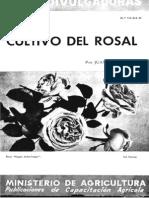 Cultivo Del Rosal