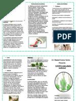 LLANTEN Como Planta Medicinal