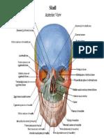 Neurology pdf netter