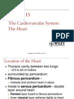 anatomy essays heart valve circulatory system the heart
