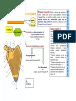 Lp1 Scapula Clavicula