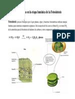 7.Fotosíntesis _(pág 170-185_)