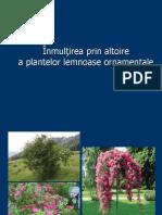 Altoirea arboricultura