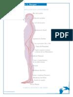 Busquet Leopold - Las Cadenas Musculares - Grafico