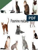 Anamarija Ekert Kabalin-Pasmine mačaka