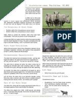 White Rhino Species
