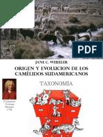 Evolución y Origen de CSA Weeler