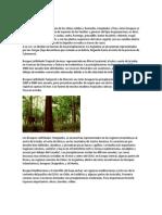 Bosques latifoliados