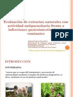 Screening de extractos naturales con actividad antiparasitaria frente a infecciones gastrointestinales de rumiantes. Adassa López
