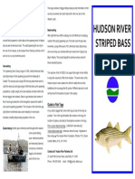 Fishguide Striped Bass Ny State