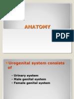 Anat urologi