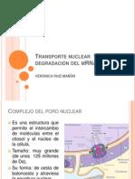 Transporte nuclear  y degradación del mRNA