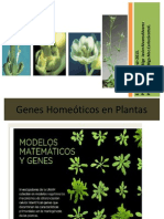 Genes Homeoticos en Plantas 3