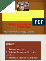 bases biologicas de la conducta.pptx