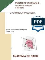 Anatomia de Nariz - Marco Morillo Rodriguez