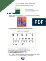 ejercicios mitosis y cromosomas 4º ESO
