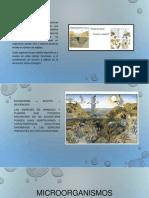 Microorganismos establecidos en los sistemas acuáticos 22