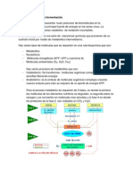 Ruta bioquímica de la fermentación (2)