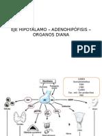EJE HIPOTÁLAMO – ADENOHIPÓFISIS – ORGANOS DIANA