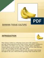 Ppt Banana TC (1)