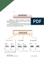 Didactic Ghidaje