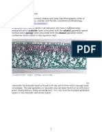 dicot_monocot_leaves.pdf