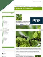 como ahuyentar invasion de hormigas sin dañarlas