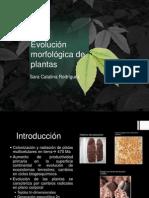 Evolucion morfológica de plantas