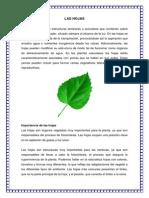 Monografia Las Hojas