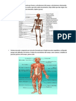 Sistemas Cuerpo Humano Maholi