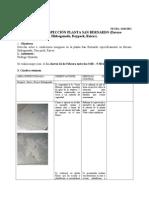 Formato Informe inspección