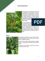 PLANTASINDUSTRIALESMEDICINALESETC.docx (1)