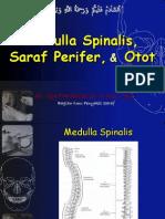 Medula Spinalis - Saraf Tepi - Otot - 2