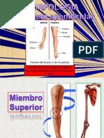 Anatomia Esqueleto a Pen Dicular