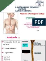 Anatomía y Fisiología de Esofago