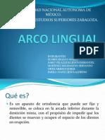 Arco Lingual