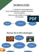 MICROBIOLOGÍA Exposición