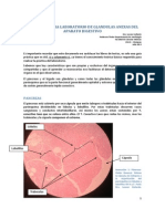 Glandulas Anexas Del Aparato Digestivo
