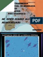 1 Sinapsis Ptencial de Membrana y Conduccion