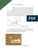 Gambaran Radiologi Kanalis Mandibularis