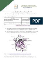 Human Circulatory System - CBSE Class 10