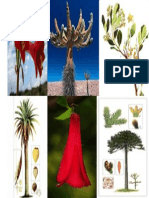 Flora Chile