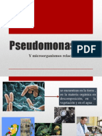 Pseudomonas-jenn