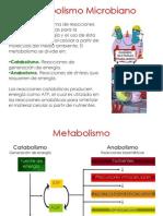 3b.MetabolismoMicrobianoBRV