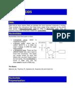 Lecture 5 - Nucleic Acids Dna Genetic Code Transcription Translation