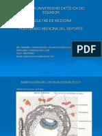 Morfología del sistéma esquelético