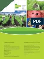 Guía fotográfica de las principales plagas del cultivo de papa en Ecuador