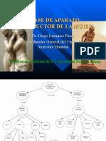 3ra Clase Pelvis - Ap. Reproductor Femenino y Masculino - Dr. Enriquez